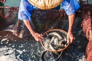 Bajia Fish Farm