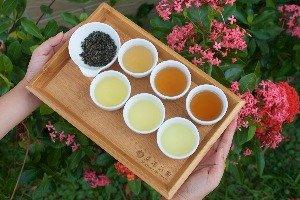 Xing Yuan Tea Garden