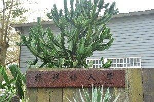 Fuhsiang Cactus