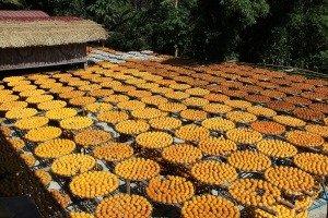 Weiweijia Persimmon Cakes Education Farm