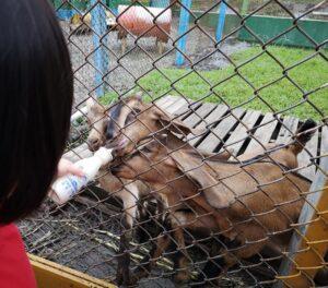 Keda Leisure Farm